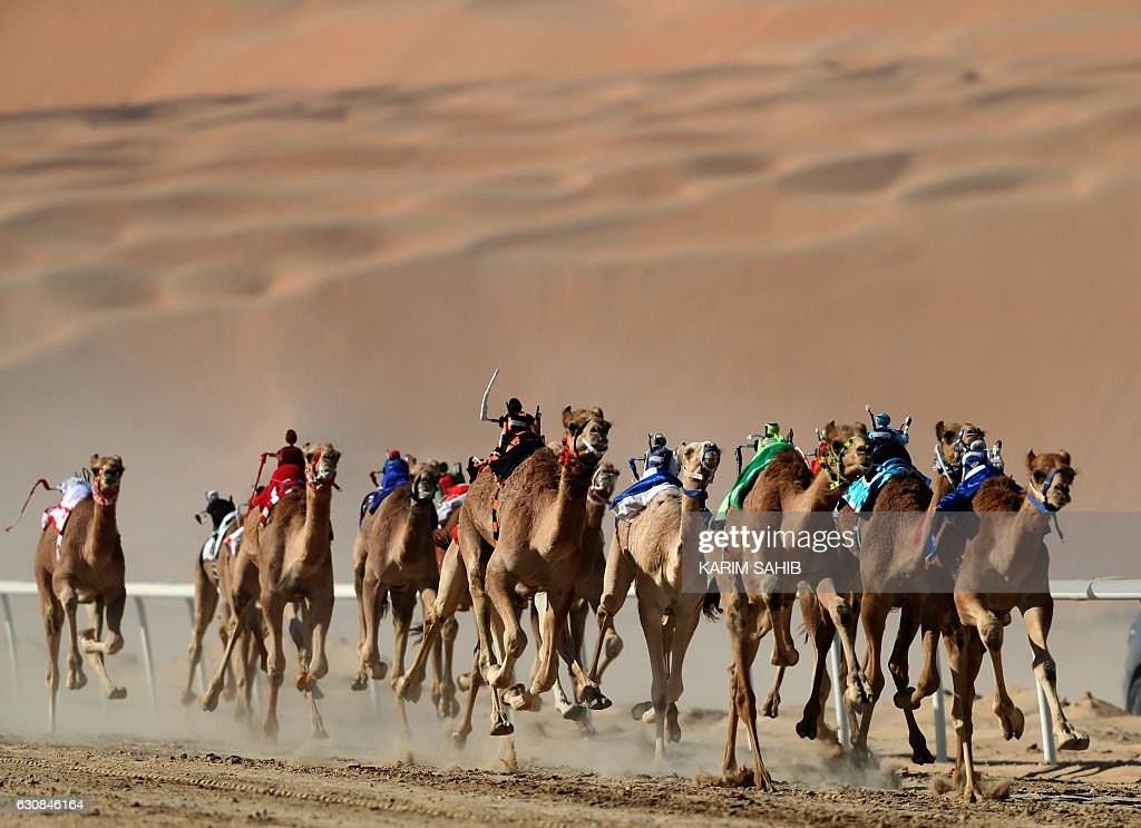 Camels race during the Liwa 2017 Moreeb Dune Festival on January 3, 2017, in the Liwa desert, some 250 kilometres west of the Gulf emirate of Abu Dhabi. The festival, which attracts participants from around the Gulf region, includes a variety of races (cars, bikes, falcons, camels and horses) or other activities aimed at promoting the country's folklore. / AFP / Karim Sahib
