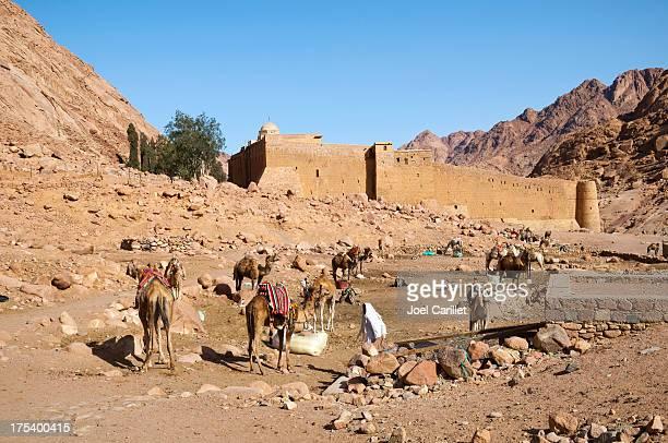 camels e mosteiro de santa catarina - monte sinai imagens e fotografias de stock