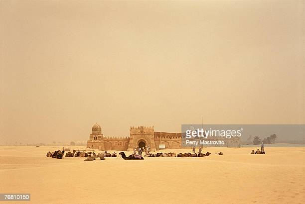 Camels resting in front of a fort