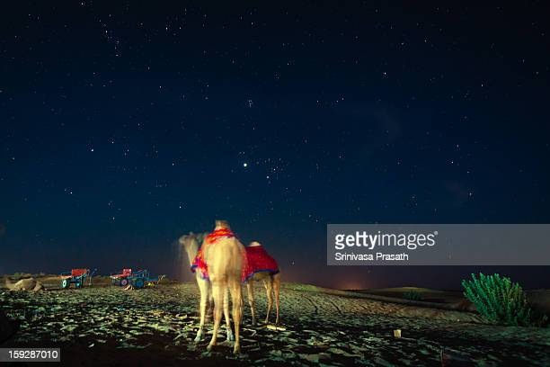 Camels resting under the starlit sky after a tiring day at the sand dunes. Jaisalmer, India.