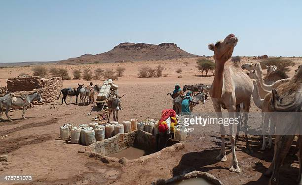 Camels wait while a woman draws water from a waterpoint filled with water collected from a well on February 28 2014 near the temple ruins from the...