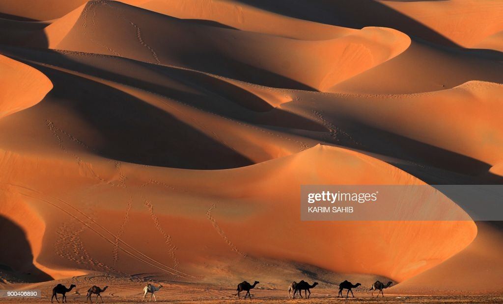Camels walk across the Liwa desert, some 250 kilometres west of the Gulf emirate of Abu Dhabi, during the Liwa 2018 Moreeb Dune Festival on January 2, 2018. The festival, which attracts participants from around the Gulf region, includes a variety of races (cars, bikes, falcons, camels and horses) or other activities aimed at promoting the country's folklore. /