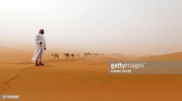 TOPSHOT Camels walk along sand dunes in the Mazayin Dhafra Camel Festival in the desert near the city of Madinat Zayed 150 kms west of Abu Dhabi on...