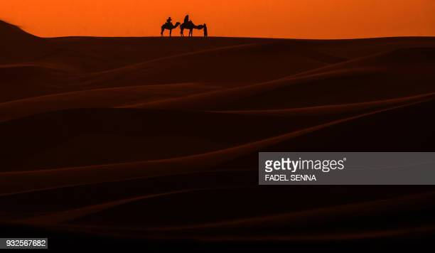 TOPSHOT Camels walk on the sand during the Gallops of Morocco equestrian race in the desert of Merzouga in the southern Moroccan Sahara desert on...
