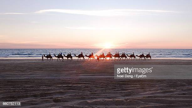 Camels Walking At Beach Against Sky During Sunset