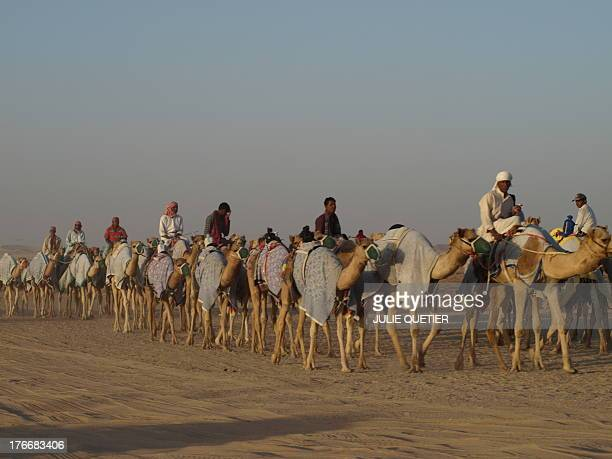 Camels walking in the Empty Quarter desert during the Al Dhafra Camel festival in january of 2010 in the Emirate of Abu Dhabi, United Arab Emirates.