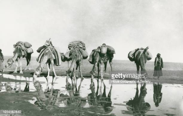Camels watering Tor alTubaiq [Jabal Tubaiq] Gertrude Bell's caravan camels and men at watering place This photograph can be dated to c25th January...