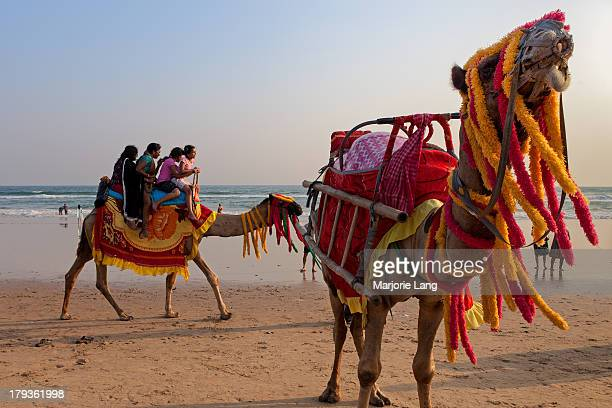 CONTENT] Camels wearing colorful garlands on the beach and Indian tourists riding them during holidays in Puri Orissa India