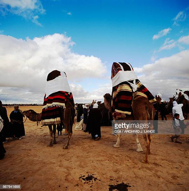 Camels with sedan chairs Berber festival Douz Tunisia