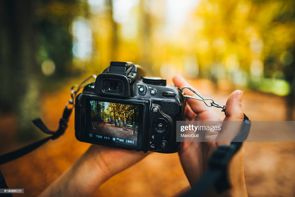 Camera capturing a forest : Stock Photo