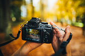 Camera capturing a forest