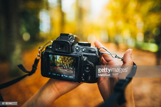 camera capturing a forest - photography themes stock pictures, royalty-free photos & images