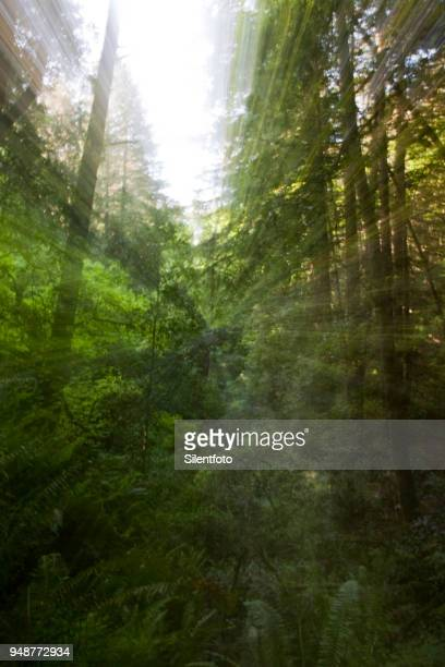 Camera Zoom in Naturally Lit Forest Scene