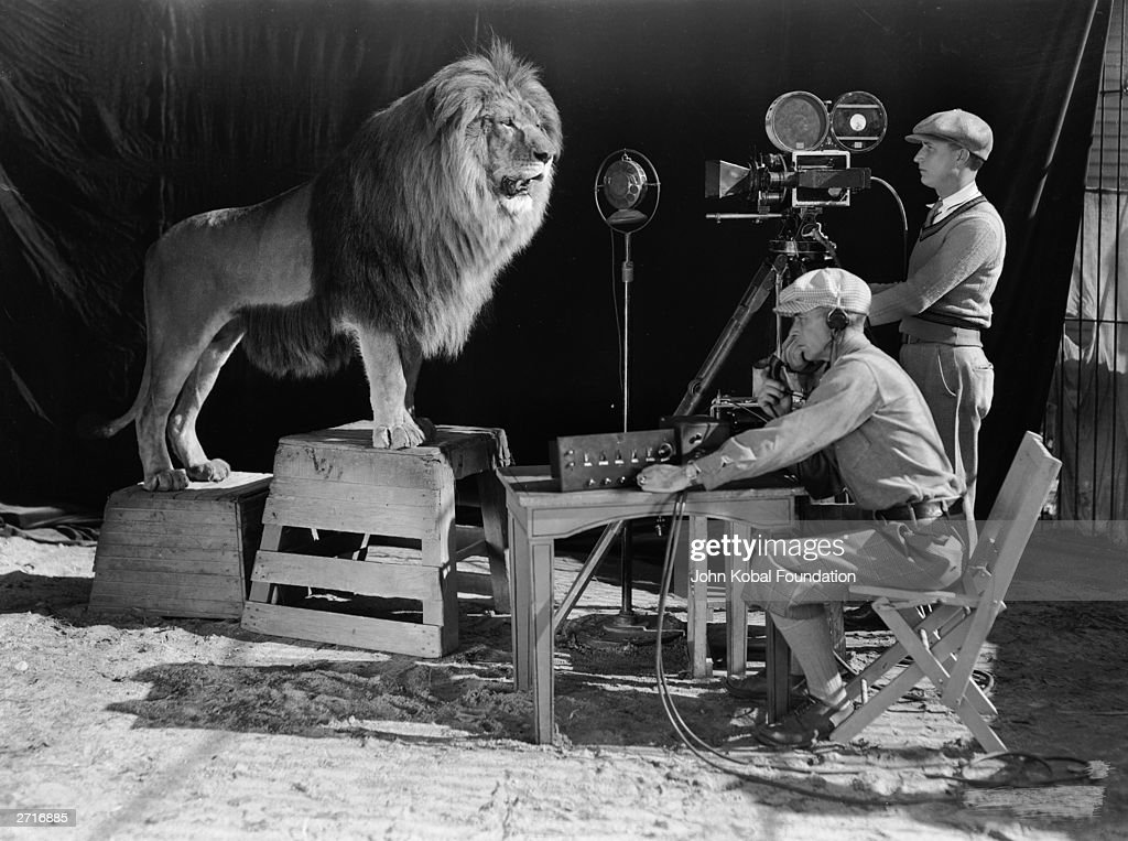 A cameraman and a sound technician record the roar of Leo the Lion for MGM's famous movie logo. The footage was first used on MGM's first talking picture 'White Shadows in the South Seas'.