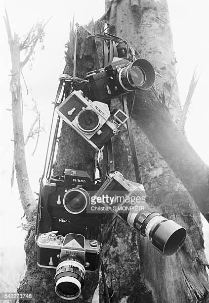 Cameras on Tree in Khe Sanh During Vietnam War
