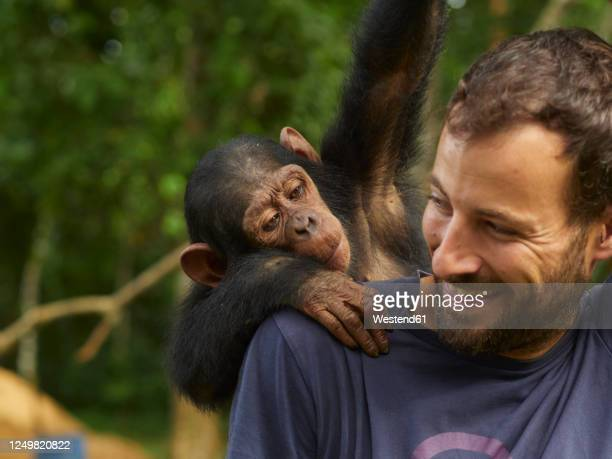 cameroon, pongo-songo, smiling man with chimpanzee (pan troglodytes) on back - animals in the wild stock pictures, royalty-free photos & images
