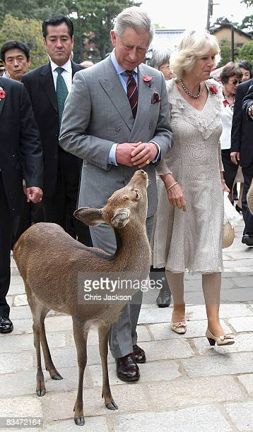 Camilla Duchess of Cornwall and Prince Charles Prince of Wales look at deer during a visit to the Todaiji Temple on October 29 2008 in Nara Japan The...