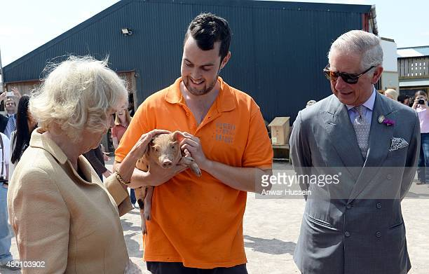 Camilla Duchess of Cornwall and Prince Charles Prince of Wales meet a piglet during a visit to 'Humble by Nature' a working organic farm run by...