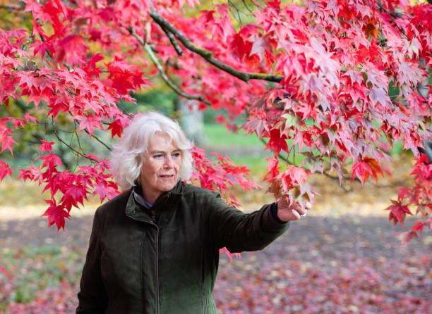 GBR: The Duchess Of Cornwall Visits Westonbirt Arboretum