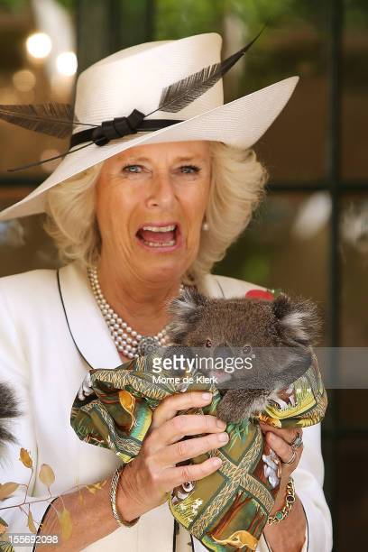 Camilla Duchess of Cornwall holds a koala at Government House on November 7 2012 in Adelaide Australia The Royal couple are in Australia on the...