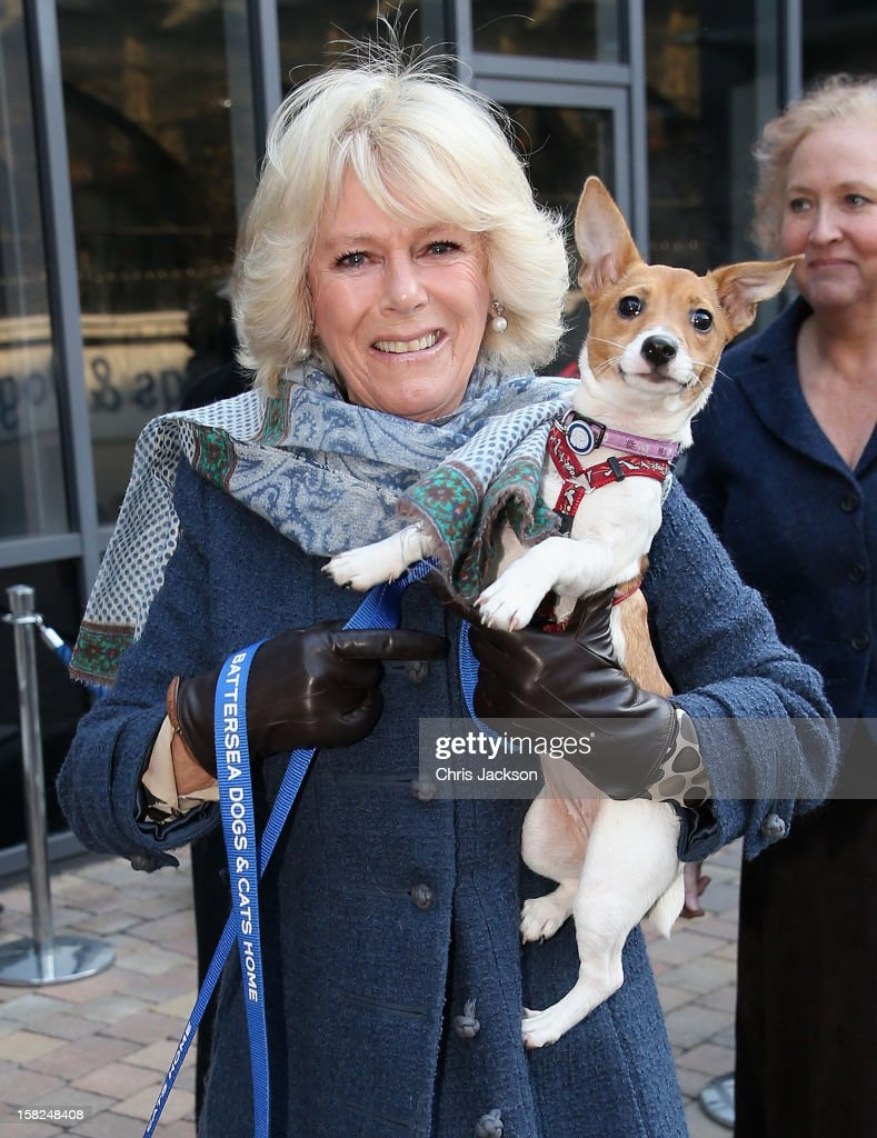 Camilla, Duchess of Cornwall holds up her 9 week old Jack Russell Terrier Bluebell as she visits Battersea Dog and Cats Home on December 12, 2012 in London, England. The Duchess of Cornwall as patron of Battersea Dog and Cats home visited with her two Jack Russell terriers Beth, a 3 month old who came to Battersea as an unwanted puppy in August 2011 and Bluebell a nine week old stray who was found wandering in a London Park in September 2012.