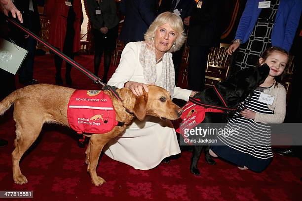 Camilla Duchess of Cornwall laughs as she pats Medical Detection Dog Daisy whilst 6 year old Cerys Davies is licked by her detection dog Wendy at St...