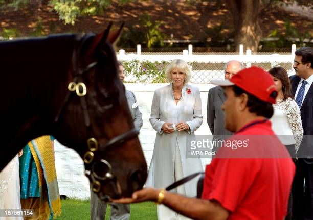 Camilla Duchess of Cornwall looks at a horse at the Poonewlle Stud Farm on Day 5 of an official visit to India on November 10 2013 outskirts of Pune...
