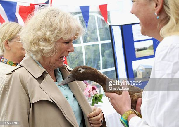 Camilla Duchess of Cornwall meets a 12 year duck called 'Jemima Puddleduck' held by vet Heike Dorn during a visit to the new veterinary surgery on...
