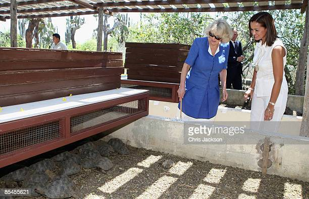 Camilla Duchess of Cornwall meets baby tortoises during a tour of the Darwin Research Station on Santa Cruz Island on March 16 2009 in Galapagos...