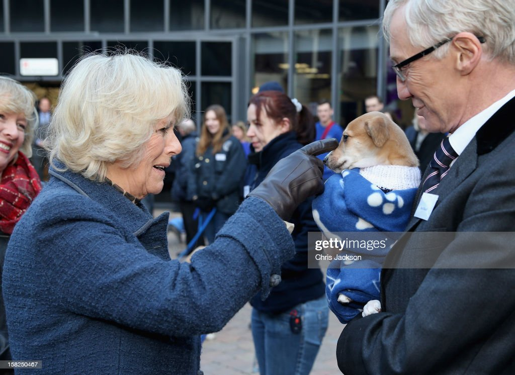 Camilla, Duchess of Cornwall meets comedian Paul O'Grady and a lurcher-cross puppy called 'Mince Pie' as she visits Battersea Dog and Cats Home on December 12, 2012 in London, England. Duchess of Cornwall as patron of Battersea Dog and Cats home visited with her two Jack Russell terriers Beth, a 3 month old who came to Battersea as an unwanted puppy in August 2011 and Bluebell a nine week old stray who was found wandering in a London Park in September 2012.