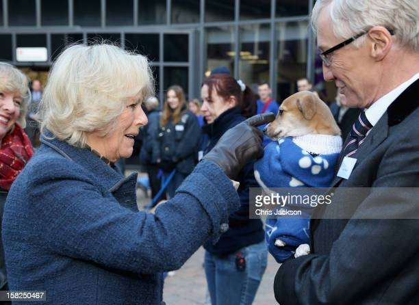 Camilla Duchess of Cornwall meets comedian Paul O'Grady and a lurchercross puppy called 'Mince Pie' as she visits Battersea Dog and Cats Home on...