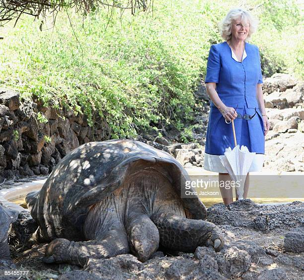 Camilla Duchess of Cornwall meets Giant tortoises during a tour of the Darwin Research Station on Santa Cruz Island on March 16 2009 in Galapagos...