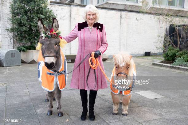 Camilla, Duchess of Cornwall meets Ollie the Donkey and Harry the Mini Shetland Pony at a charity event at the Guards Chapel on December 012 2018 in...