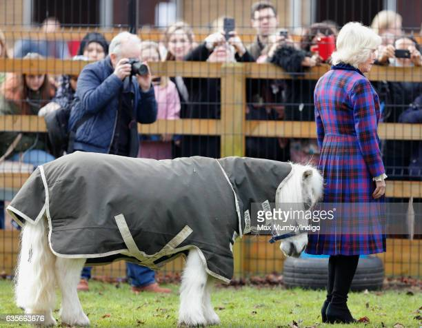 Camilla Duchess of Cornwall meets 'Pedro' a Shetland Pony during a visit to the Ebony Horse Club riding centre to celebrate the club's 21st...