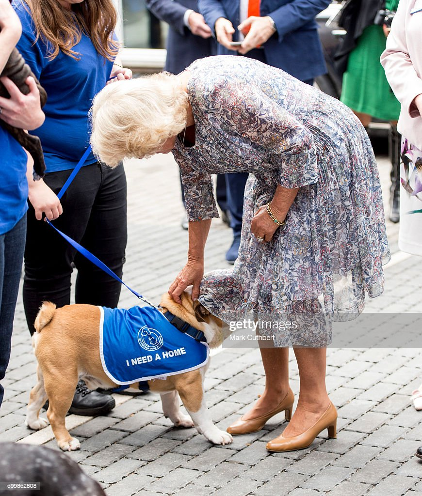 Camilla, Duchess of Cornwall meets Winston, one of the dogs at Battersea Dogs & Cats Home on September 7, 2016 in London, England.