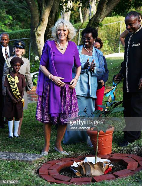 Camilla Duchess of Cornwall Plants a tree at the Governor General's Residence during a one day tour of Saint Lucia on March 7 2008 in Castries St...