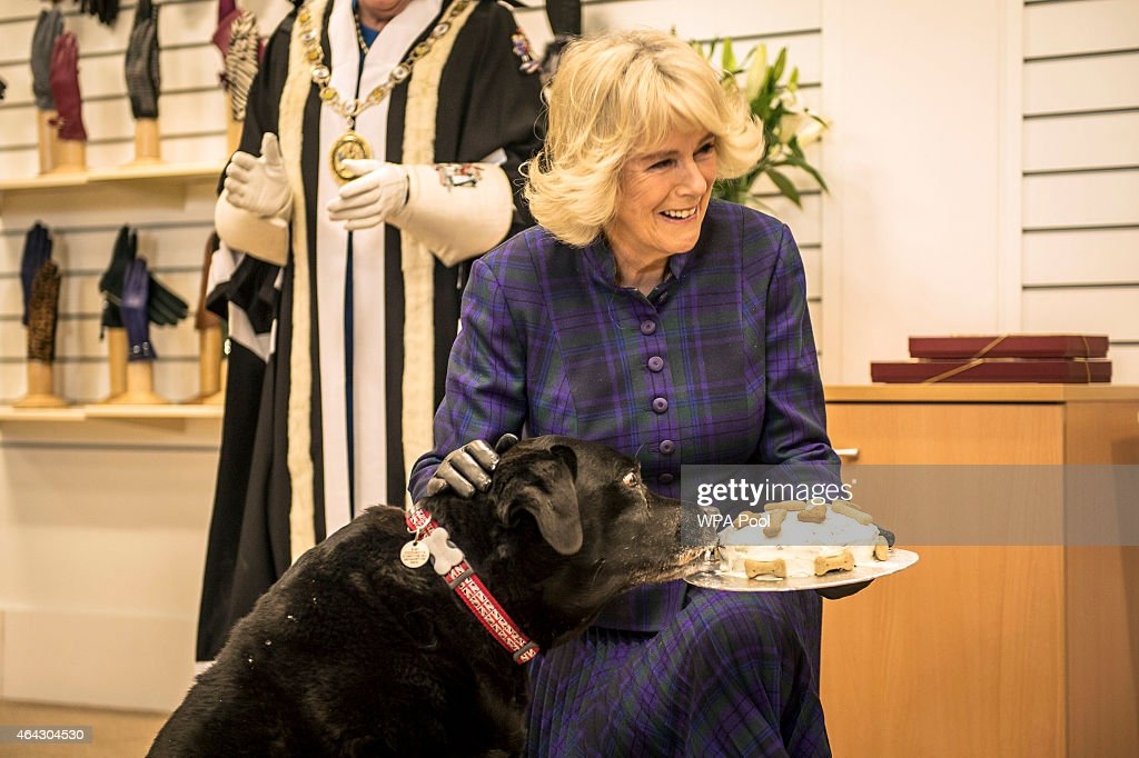 Camilla, Duchess of Cornwall presents a long service certificate and special doggy cake to Ruby the rescue dog, inside Dents Fine Accessories factory on February 24, 2015 in Warminster, England.