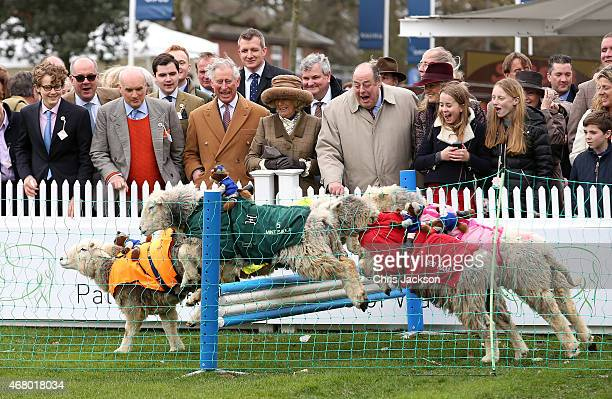 Camilla Duchess of Cornwall Prince Charles Prince of Wales and Sir Nicholas Soames watch sheep jump over a fence during the 'Lamb National' at The...