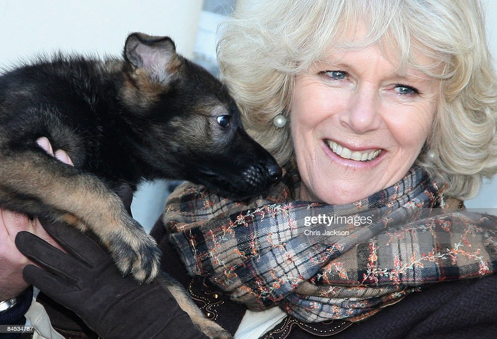 Camilla, Duchess of Cornwall smiles as she meets puppies at the Metropolitan Police Dog Training Centre on January 29, 2009 in Keston, London, United Kingdom. The Duchess toured the facility meeting dog handlers and seeing demonstrations.