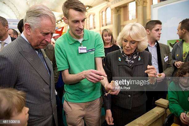 Camilla Duchess of Cornwall talks to Jamie Toms from Poultry Talk as she holds a 3 dayold Pekin Bantam chick and Prince Charles Prince of Wales looks...