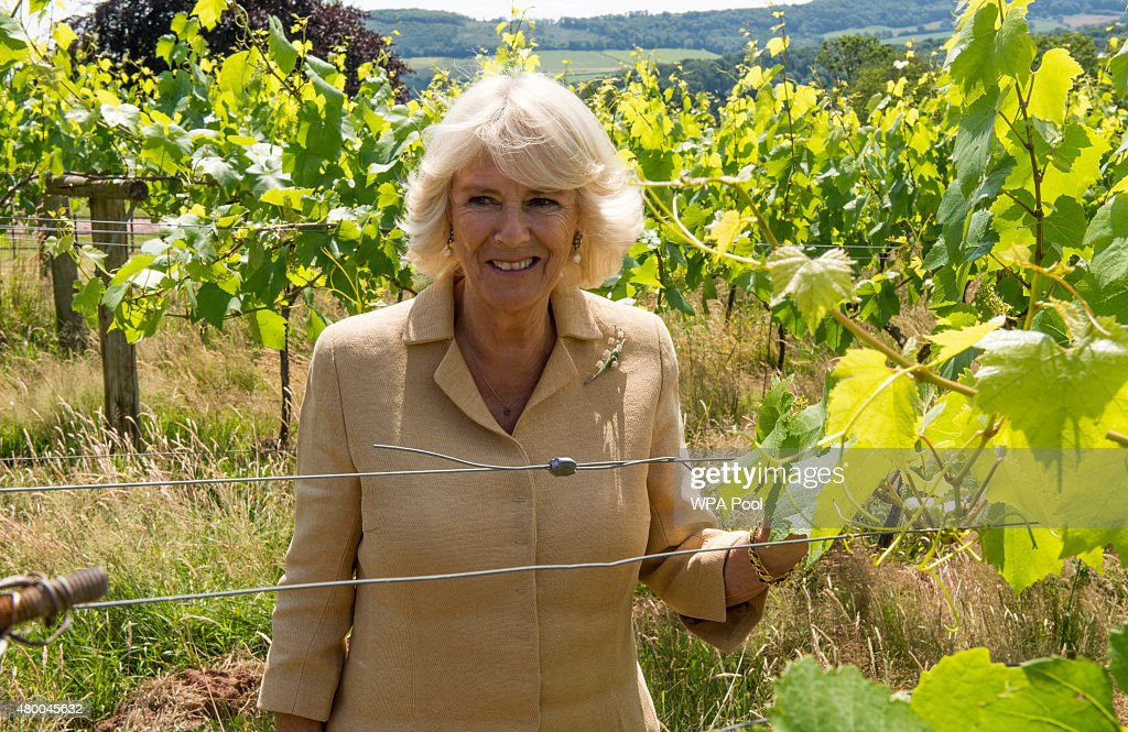 Camilla, Duchess of Cornwall tours the Ancre Hill vineyard on July 9, 2015 in Monmouth, Wales. The Duchess met staff and supporters, and then officially opened the new winery on Rockfield Road.