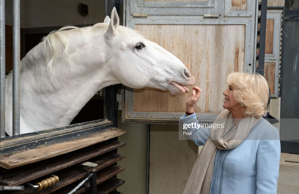 Camilla, Duchess of Cornwall views the horses during her visit to the Spanish Riding School in Vienna during the second day of her visit to Austria, on April 6, 2017 in Vienna, Austria. Prince Charles, Prince of Wales and Camilla, Duchess of Cornwall are on the last of a nine-day tour of Europe.