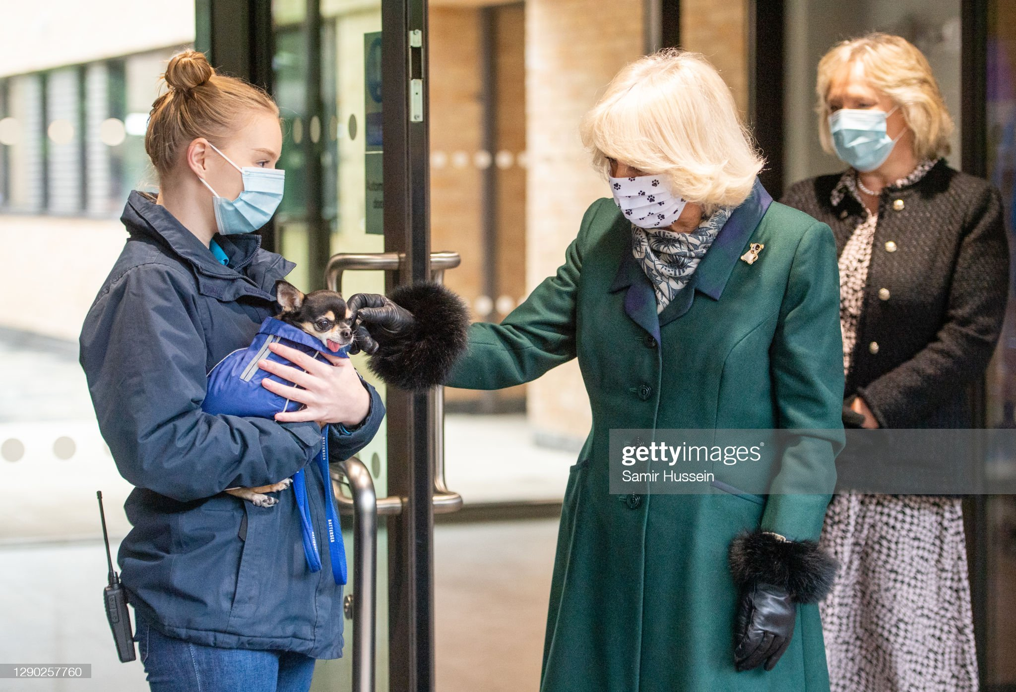 camilla-duchess-of-cornwall-visits-battersea-dogs-home-in-windsor-on-picture-id1290257760