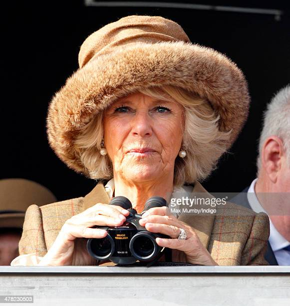 Camilla Duchess of Cornwall watches the racing as she attends Ladies Day day 2 of the Cheltenham Festival at Cheltenham Racecourse on March 12 2014...