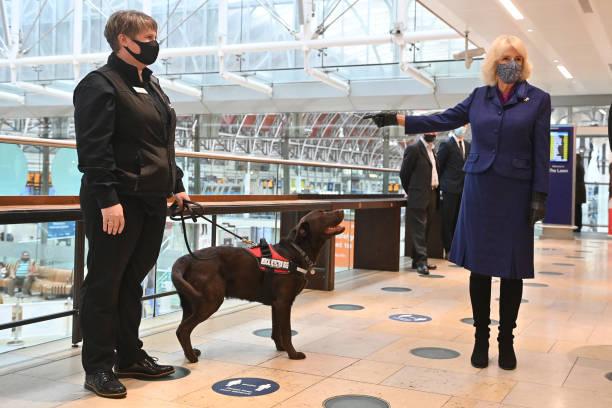 GBR: The Duchess Of Cornwall Visits Medical Detection Dogs At London Paddington