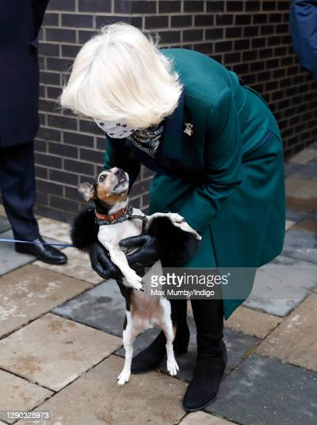 Camilla, Duchess of Cornwall , with her Jack-Russell Terrier 'Beth', visits Battersea Dogs Home to open the new kennels and thank the centre's staff...