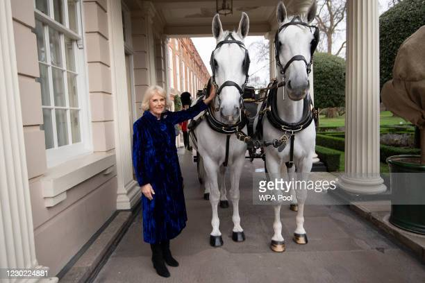 Camilla, Duchess of Cornwall with The Royal Brougham as the Duchess of Cornwall decorates the Clarence House Christmas Tree virtually with children...