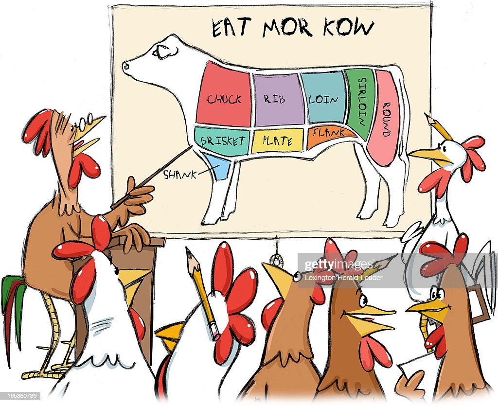 Chicken illus pictures getty images camille weber color illustration of chickens in classroom learning cuts of beef from diagram titled pooptronica
