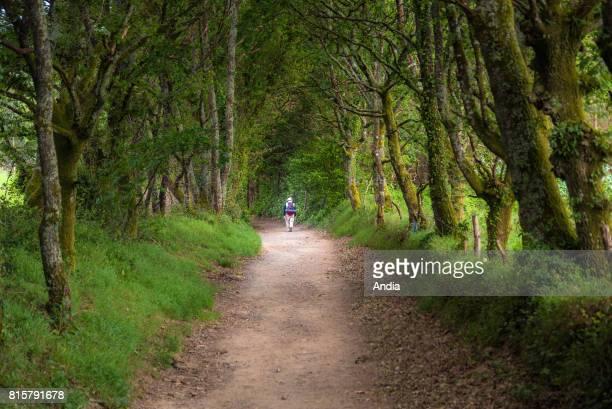 Camino de Santiago pilgrimage route Way of St James Pilgrim along the Camino frances in the undergrowth