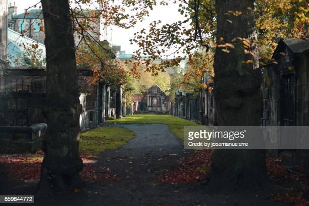 camino entre árboles - josemanuelerre fotografías e imágenes de stock